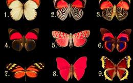 Con bướm bạn chọn bộc lộ điều 'đau đáu' trong lòng: Bạn khao khát tự do hay đang chịu nhiều áp lực?