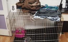 Bé trai 5 tuổi bị cha mẹ nuôi nhốt trong chuồng mèo, dội nước sôi lên người đến chết và bản án cuối cùng gây xôn xao dư luận