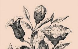 Thách thức thị giác: Bạn có tìm được 7 khuôn mặt người trên cành hoa này?