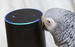Đã bị đuổi khỏi vườn thú vì văng tục, con vẹt láo lếu còn tán tỉnh trợ lý ảo để mua đồ ăn trên Amazon