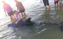 Hơn 2 giờ đồng hồ hồi sức và giải cứu cá voi nặng 2 tạ mắc lưỡi câu dạt vào bờ