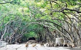 Du ngoạn hòn đảo 2.000 con khỉ ở Cần Giờ chỉ chưa tới 100.000 đồng