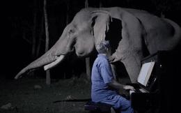 Chú voi già từng bị bạo hành ứa nước mắt khi được nghệ sĩ chơi đàn piano cho nghe