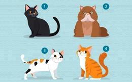 Chú mèo con yêu thích sẽ tiết lộ bạn tìm kiếm điều gì trong chuyện tình cảm, sự chung thủy hay sự đồng cảm, bao dung