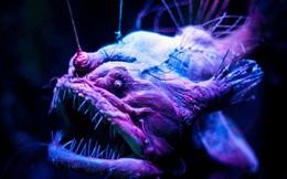 Cận cảnh 'dung nhan' sinh vật dưới biển sâu có thể khiến bạn hết hồn!