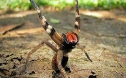 Định giẫm chết con nhện nhưng lại thôi, người đàn ông được giải cứu khỏi khổ nạn và hồi kết bất ngờ vào phút cuối