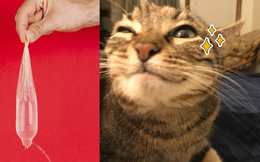 Chồng đổ tội cho mèo cào lủng bao cao su khiến vợ dính bầu