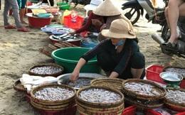 """Khám phá chợ """"mực nháy, cá nhảy"""" tờ mờ sáng ở Đà Nẵng"""