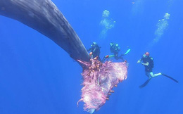 24h qua ảnh: Thợ lặn giúp cá voi khổng lồ thoát khỏi lưới đánh cá