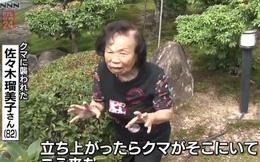 Cụ già 82 tuổi hỗn chiến với gấu hoang nặng 150kg: 'Bà đấm nó văng lên trời luôn'