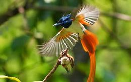 Clip: Cận cảnh loài chim có vẻ đẹp quyến rũ nhất hành tinh