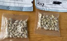 """Mỹ: Nhiều người dân nhận được các gói hạt giống bí ẩn đến từ TQ, giới chức địa phương """"lo sốt vó"""""""