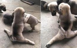 """Chú chó con biểu diễn tuyệt kỹ """"xoạc chân"""" khiến hội chị em ngỡ ngàng, xấu hổ vì đi tập yoga cũng không dẻo bằng em cún"""