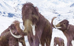 Hồi sinh voi ma mút hơn 4.000 tuổi từ xương chân