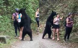 Hy hữu: Gặp nhóm nữ du khách đi bộ trong rừng, gấu đen tiến đến 'sàm sỡ'