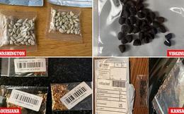 """Vụ những gói hạt giống bí ẩn đến từ TQ khiến người Mỹ """"hốt hoảng"""": Câu trả lời của Bắc Kinh"""