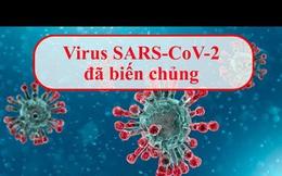 BS Nguyễn Hồng Hà: Biến chủng Sars-CoV-2 ở Đà Nẵng tăng bám dính vào cơ thể, có bất thường không?