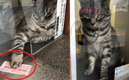 """""""Nhân viên bán vé"""" 4 chân trước cửa nhà hát Nhật Bản bỗng nổi như cồn vì sở hữu gương mặt cau có khó ở như đuổi khách!"""