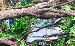 Cây xà cừ đổ gãy đè bẹp 3 ô tô trên phố Hà Nội