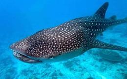 Sự thật về 'quái vật' đại dương có răng mọc quanh mắt