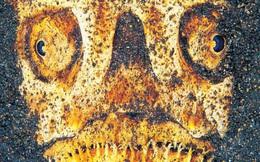 'Quái vật' dưới biển sâu (P2)
