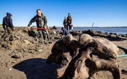 Băng tan tại Bắc Cực để lộ hài cốt voi ma mút niên đại 10.000 năm tuổi