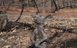 Năm 2020 hoang tàn của người Úc: Chưa kể đại dịch, trận cháy rừng đại thảm họa hồi đầu năm đã khiến gần 3 TỈ sinh vật khốn khổ