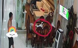 """Xem camera thấy bố mở tivi cho chó cưng nằm xem với vẻ mặt căng thẳng, cô con gái phát hiện lý do khiến dân mạng """"ngã ngửa"""""""