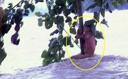 """Cuộc sống sau 22 năm của cô bé 7 tuổi kiên cường ôm thân cây suốt 9 tiếng giữa trận """"đại hồng thủy"""" năm 1998"""