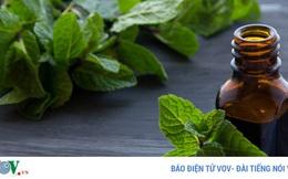 9 tác dụng phụ nguy hiểm của dầu bạc hà