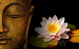 """""""Làm thế nào để hoa trong bình tươi lâu hơn?"""" - thiền sư giải thích đáp án, mang đến lợi ích trọn đời cho tất cả mọi người"""