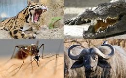 1001 thắc mắc: Loài vật nhỏ bé nào sát hại nhiều người nhất?