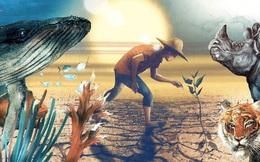 10 năm - chúng ta còn ngần ấy thời gian để phục hồi sự đa dạng sinh học trên Trái Đất trước khi đợt tuyệt chủng thứ 6 xảy ra!