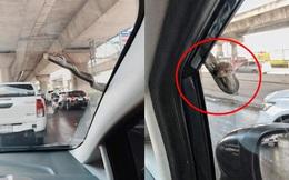 """Đang lái ô tô, tài xế xanh mặt khi thấy """"bé Na"""" ngoe nguẩy nhòm qua kính"""