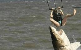 Cá mập hung tợn tấn công người chơi dù lượn khiến ai cũng chắc chắn rằng nạn nhân sẽ bỏ mạng nhưng câu chuyện thật lại khác hoàn toàn