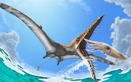 Rhamphorhynchus: Loài thằn lằn bay 'tí hon' sở hữu hàm răng của tử thần