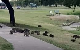"""Công viên Mỹ bị 1 bầy """"sinh vật đáng sợ"""" xâm chiếm, nhiều người hoảng hốt khi tới gần"""