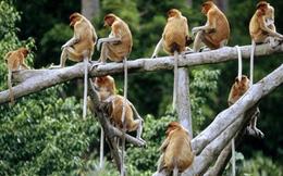 Tìm nơi sinh sống, bầy khỉ đi qua 3 ngọn núi vẫn chưa thấy ưng và hồi kết khiến con người giật mình xem lại bản thân