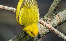 Nếu thấy chim bay vào cửa sổ, bạn sẽ làm gì? Điều đó tiết lộ cuộc sống sắp tới của bạn sẽ gặp phải những chướng ngại hay may mắn bình an