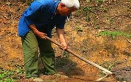 Cuốc đất đào được bình cổ báu vật, người nông dân tưởng nhầm bô đi tiểu suốt 26 năm