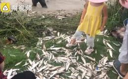 Mưa lũ ở Trung Quốc khiến nước sông dâng cao và đục ngầu, hàng trăm người bất chấp nguy hiểm bắt cá giữa đường, cảnh tượng lạ lùng gây chú ý MXH