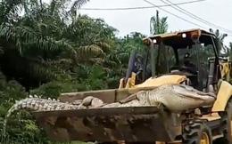 Cá sấu 'ma quỷ' nặng nửa tấn ám ảnh dân làng, sợ đến nỗi chôn đầu một nơi, xác một nẻo