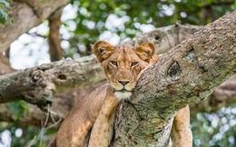 Kỳ công săn ảnh động vật hoang dã ở nơi nguy hiểm nhất thế giới