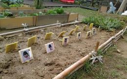 """Đưa học sinh mẫu giáo đi trồng rau, nhà trường nhận lại một """"rổ"""" phẫn nộ từ dân mạng vì bức ảnh thành quả đầy ám ảnh"""