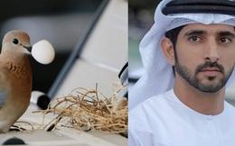 Chim mẹ chọn đúng ô tô của Hoàng tử Dubai làm tổ và pha xử lý không ai ngờ của chàng hoàng tử điển trai được dân mạng khen ngợi rần rần