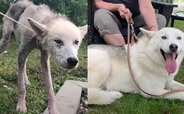 Xúc động trước cuộc lột xác ngoạn mục của chú chó bị hành hạ chỉ còn da bọc xương