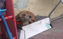 Cô chó bị bỏ rơi trên đường suốt 5 tháng trời, tổ chức động vật đến cứu thì nhận ra điều xót xa ở con vật khi nhấc bổng nó lên