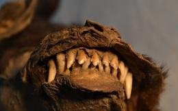 Phát hiện sinh vật kỳ lạ bên trong thân xác của con chó sói 14.000 tuổi