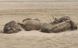 Sinh vật lạ khổng lồ trôi dạt vào bờ biển Anh, người dân hoang mang không biết là con gì