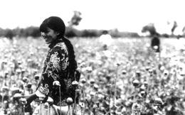 """""""Đế chế ma túy"""" phục vụ cỗ máy chiến tranh của Đế quốc Nhật"""